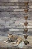 Chat mignon détendant devant le mur de briques image libre de droits
