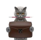 Chat mignon d'homme d'affaires d'employé de bureau avec la valise ou sac d'isolement sur le blanc Images stock
