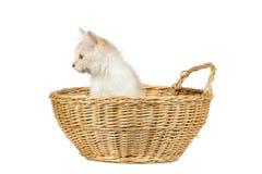 Chat mignon d'isolement au-dessus du fond blanc Image stock