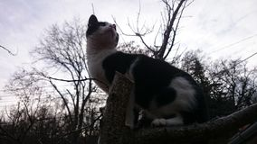 Chat mignon dans l'arbre Photos stock