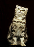 Chat mignon dans l'obscurité Photographie stock