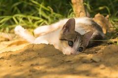Chat mignon de bébé jouant et posant sur un beau fond Images stock