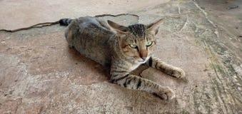 Chat mignon dormant confortablement photo stock