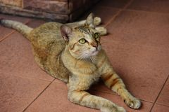Chat mignon restant à la maison photographie stock