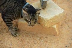 Chat mignon restant à la maison photos libres de droits