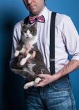chat mignon se reposant sur des mains de l'homme et regardant la caméra photos stock