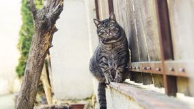 Chat mignon se reposant sur la barrière Photos stock