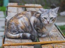 Chat mignon se reposant sur le banc Image libre de droits