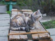 Chat mignon se reposant sur un banc Images libres de droits