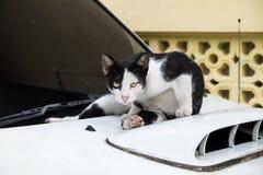Chat mignon se reposant sur une voiture et vous regardant Photo libre de droits
