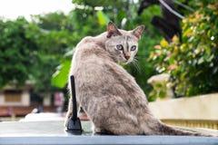 Chat mignon se reposant sur une voiture et vous regardant Photo stock