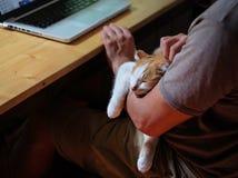 Chat mignon se trouvant sur la main du ` s d'homme photos libres de droits