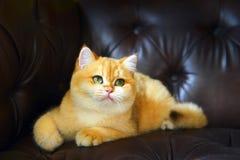Chat mignon sur le sofa photographie stock libre de droits