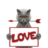 Chat mignon tenant le dard et le cadre avec amour Photo stock
