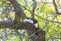 Chat monté sur un arbre Photographie stock