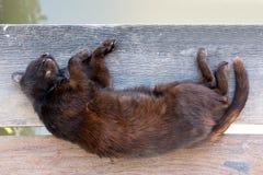 Chat mort sur le vieux bois, concept de la vie Photographie stock