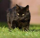 Chat noir Photographie stock