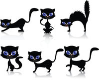 Chat noir Image stock