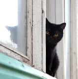 Chat noir Photographie stock