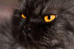 Chat noir. Image stock