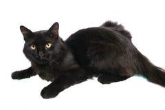 Chat noir Images stock