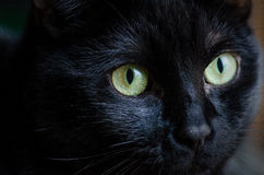 Chat noir Photos stock