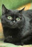 Chat noir Photo libre de droits