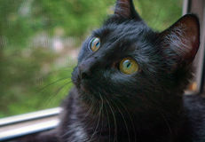 Chat noir Photographie stock libre de droits