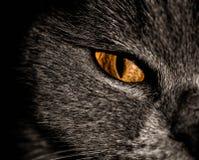 Chat noir Photo stock