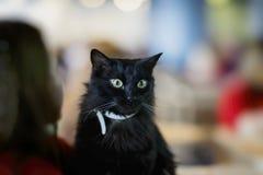 Chat noir adorable dans des mains de volontaire de fille, dans l'abri pour le sans-abri Ses beaux yeux verts étonnés cela fille Photographie stock libre de droits