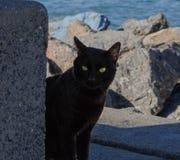Chat noir aux yeux verts vous observant Images libres de droits