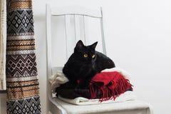 Chat noir avec des vêtements d'hiver sur la chaise Photos libres de droits