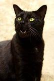 Chat noir avec la bouche ouverte Photographie stock libre de droits