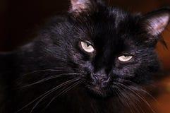 Chat noir avec le regard aggravé Photographie stock libre de droits