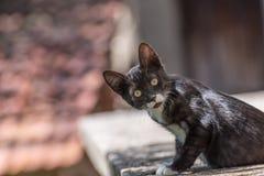 Chat noir avec les taches blanches Photos stock