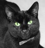 Chat noir avec les yeux verts Images stock