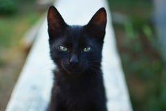 Chat noir avec les yeux verts regardant l'appareil-photo Photographie stock libre de droits