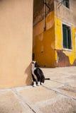 Chat noir dans Burano, Venise Photos stock