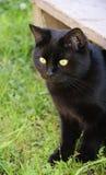 Chat noir dans l'herbe verte Photographie stock