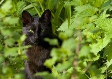 Chat noir dans l'herbe verte Photos stock
