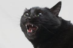 Chat noir dans la colère Photos libres de droits