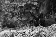 Chat noir dans le jardin Photographie stock libre de droits