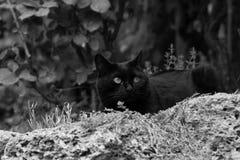 Chat noir dans le jardin Images stock
