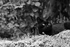 Chat noir dans le jardin Photographie stock