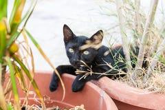 Chat noir dans le pot Photos libres de droits