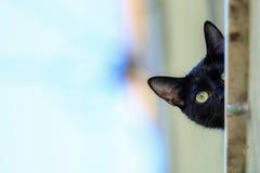 Chat noir dans une fenêtre regardant vers le bas photos stock