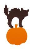 Chat noir de mousse sur le potiron Photos libres de droits