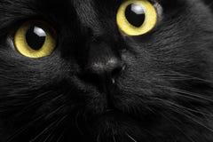 Chat noir de portrait de plan rapproché Photos libres de droits