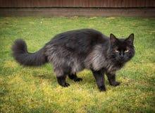 Chat noir dehors Photo stock