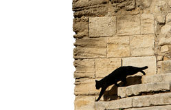 Chat noir devant le mur Photos libres de droits